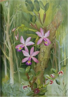 Come see the Brazilian jungle with Margaret Mee. Botanical Drawings, Botanical Illustration, Botanical Prints, Illustration Art, Vegetable Illustration, All Poster, Belleza Natural, Shape Design, Botany