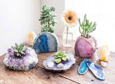 Earth Family Crystals · Ontem · This is a pretty neat idea! Succulent plants displayed in Amethyst & Agate Geode Specimens! ♥ #crystaleyecandy #crystalbliss | FACEBOOK