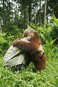 2008 Borneo – Save The Orangutan by Christian Åslund