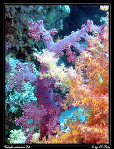 Colorful underwater Life by hpizka, via Flickr