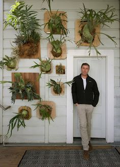 I have been lusting after a mounted staghorn fern for sometime - this assortment on a wall is incredible!