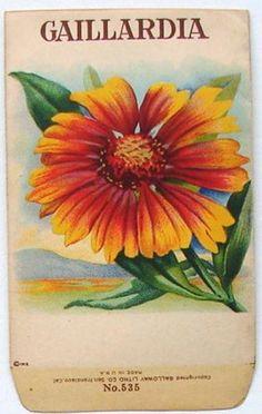 Stock, Gaillardia 535, Vintage Seed Packet