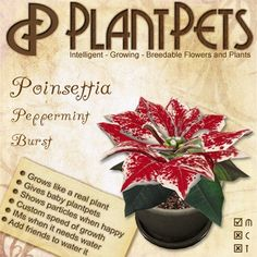 PlantPet Seed [Poinsettia *Peppermint Burst*]