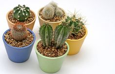 desert plants pots | Desert Plants for Phoenix Homes and Gardens | DexKnows.com
