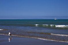 Paekakariki Beach looking out to the South Island New Zealand Beach, South Island, Beach Look, British Isles, Photography Photos, Bald Eagle, Coast, Explore, Water