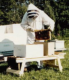 The Stonehaven BEE-Mate A Folding Work Stand for Beekeepers: convenient work stand to set supers on, with a rack to hang up frames