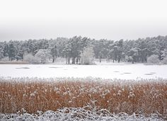 Another photo of yesterday morning's snow at Frensham Little Pond. A perfect alpine snow scene deep in the Surrey countryside!