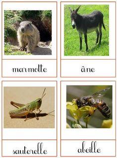 Cartes de nomenclature