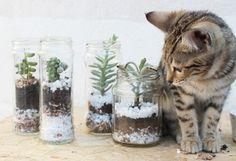 Faça você mesmo: mini jardim suspenso de suculentas - Blog do Elo7
