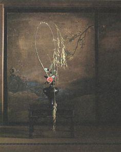 Toshiro Kawase / 川瀬敏郎 椿 ・ 柳 (法然院方丈) Camelia, Willow Ikebana Flower Arrangement, Ikebana Arrangements, Floral Arrangements, Art Floral, Floral Design, Japanese Flowers, Japanese Patterns, Seasonal Flowers, Japan Art