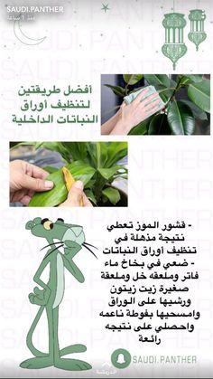 Container Herb Garden, Veg Garden, Garden Plants, Indoor Plants, House Plants, Planting Vegetables, Growing Vegetables, Growing Plants, Outdoor Flower Planters