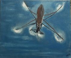 common pond skater - Summer 2016 - oil by Martin Chytry