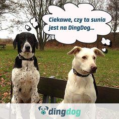 A Ty i Twój pies jesteście na DingDog i ściągnęliście aplikację? #DingDog #aplikacja #app #dog #pies #walk #spacer #DogLovers