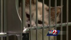 89 cats, 1 dog, 35 dead cats found in Port Orange apartment  Officials said the landlord was concerned that tenant Stacey Daraio had more cats than city ordinance allowed, and once inside, they found she had duct-taped doors and windows to mask the odor of 89 sick cats and a dog. Thirty-five dead cats were found ...