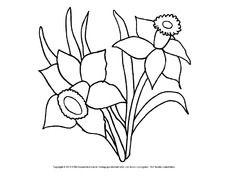 Ausmalbild Narzissen 4 Pdf Flower Coloring Sheets Flower Coloring Pages Coloring Pages