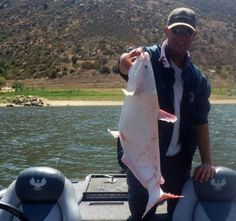 Albino catfish caught in El Capitan reservoir while bass fishing. A place near and dear to my heart. Catfish Fishing, Bass Fishing, Albino, Creatures, Friends, Heart, Water, Amigos, Gripe Water