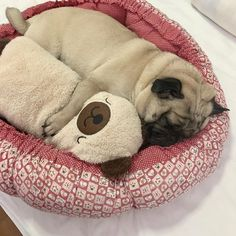Cute Pug Puppies, Cute Pugs, Super Cute Animals, Cute Funny Animals, Pugs And Kisses, Baby Pugs, Happy Puppy, Happy Animals, Pug Love