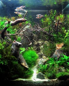 Amazing Nano Cube with driftwood and live plants. Purchase driftwood for your aquarium at www.driftwoodboss.com