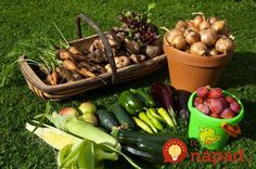 Ak ste dlhoročným záhradkárom, určite viete, že nie je jedno, kedy a ako zberáte zeleninu vo vašej záhrade. Ak ju vezmete v správnom čase, bude nielen chutnejšia (obsah živín sa v plodoch počas dňa mení),