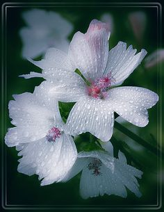 art-and-dream: Flowers photography wonderful style by L. Flora Flowers, Rare Flowers, Amazing Flowers, Beautiful Flowers, White Flowers, Shade Plants, Cool Plants, Garden Drawing, Orchid Care