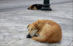 Sleeping dogs...
