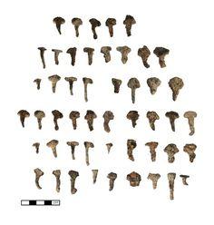 Israël Des clous de fers à cheval de l'époque des Croisades. Ces clous confirment la présence des chevaux de l'Ordre du Temple qui ont été logés dans les « Ecuries de Salomon ».Des artéfacts archéologiques provenant du Mont de Temple sont découverts pour la première fois dans l'histoire. Vous avez l'occasion d'y prendre part !