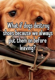 """+What+if+dogs+destroy+shoes+because+we+always+put+them+on+before+leaving?"""