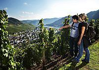 Wine hiking in Cochem in Moselle Valley in Germany - Cochem Mosel Wine hiking