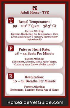 Adult Horse TPR - Download the mobile app to have this info handy on your phone at all times. Available on iTunes & Google Play. Constantly growing 5-star rated equine health resource. Clydesdale, Appaloosa, Horse Information, Horse Care Tips, Horse Anatomy, Horse Facts, Horse Camp, Horse Training Tips, Horse World