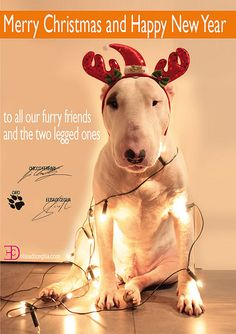 #BullTerrier #Dog #Art - Merry #Christmas 2011 #English #Bull #Terrier #Doggy #Terriers #Creative #Dogs #DogArt #Photo