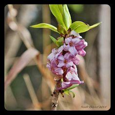 Výtvarné foto Jpg, Photo And Video, Plants, Beauty, Pictures, Camera, Plant, Beauty Illustration, Planets
