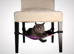 Cat Crib - If your cat likes to hide under things, why not let him perch under the dining room chairs? This one costs $29 but I think you could make one by just looking at the pic... Deb