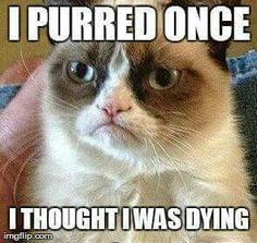 Do you love Grumpy cat. If you do, These Grumpy cat Memes work for you.These Grumpy cat Memes work are so funny and humor. Grumpy Cat Quotes, Gato Grumpy, Funny Grumpy Cat Memes, Funny Cats, Funny Jokes, Grumpy Kitty, Hilarious Quotes, Cartoon Jokes, Angry Cat Memes