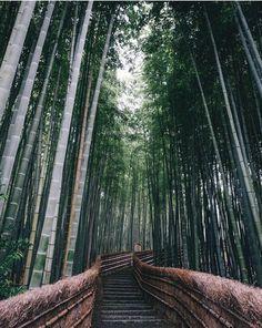Un fotografo cattura splendide immagini del Giappone | AnimeClick.it