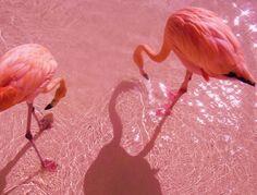 Pink flamingos.