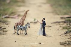 Giraffe, Google, Animals, Animais, Animales, Animaux, Giraffes, Animal, Dieren
