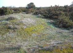 Habitat in a good conservation status with a compact moss layer and many focal native species (mainly dwarf shrubs and rosette and tussocky plants). Photo credit: Del Vecchio et al. The monitoring of biodiversity has focused mainly on the species level. However researchers and land managers are making increasing use of complementary assessment tools that address higher levels of biological organisation i.e. communities habitats and ecosystems. In a recent study published in AoB PLANTS Del…