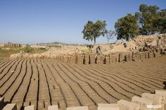 One of the main sources of income for many Madagascans is #brickmaking. With the country's abundance of clay this as easy way to support a family where jobs are scarce While this may seem like a solution to #economic hardship, there are often more #bricks produced than needed to support current levels of #construction.