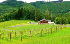 McMinnville AVA Official Website - Wineries and wine tasting in the heart of the Willamette Valley, Oregon.