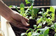 Как спасти руки после огорода Не РАБотать
