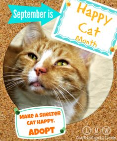 September is Happy Cat Month. Check out three ways our cats say makes them happy.