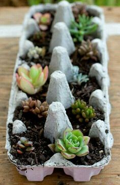 Container Gardening Ideas Egg-Carton Succulents - A simple planter and gift idea. - A really cute succulent gift idea and temporary planter using an egg-carton. So easy to make - perfect for a house warming or hostess gift. Types Of Succulents, Growing Succulents, Cacti And Succulents, Planting Flowers, Propagating Succulents, Succulent Gardening, Container Gardening, Gardening Tips, Succulent Cuttings