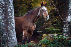 Altes Pferd steht im Wald  Pferd | Bilder | Foto | Fotografie | Fotoshooting | Pferdefotografie | Pferdefotograf | Ideen | Inspiration | Pferdefotos | Horse | Photography | Photo | Pictures