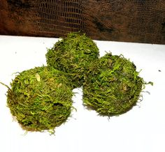 Moss - 2 inch Moss Balls- Beautiful Hand made balls of Moss-Wedding favors-Fairy party-Pomander Woodland Decor, Rustic Cabin Decor, Woodland Wedding, Topiary Trees, Live Plants, Beautiful Hands, Wedding Favors, Wedding Ideas, Balls