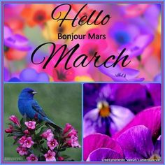 Ephéméride - Seasonal Calendar added a new photo. January To December, Hello November, March Month, Bonjour Mars, Hello Bonjour, Spring Months, Months In A Year, 12 Months, Facebook Cover Photos Flowers