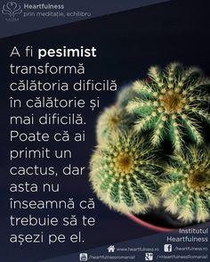 A fi pesimist transformă călătoria dificilă în călătorie și mai dificilă. Poate că ai primit un cactus, dar asta nu înseamnă că trebuie să te așezi pe el. #cunoaste_cu_inima #meditatia_heartfulness #hfnro Meditatia Heartfulness Romania Mai, Cactus, Signs, Google, Prickly Pear Cactus, Shop Signs, Sign, Dishes