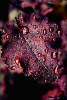 Autumn leaves that deep rich burgundy color - noblesse - - Autumn leaves that deep rich burgundy color - noblesse Shades Of Burgundy, Burgundy Wine, Burgundy Color, Red Plum, Dark Red, Burgundy Wedding, Purple, Burgundy Shoes, Maroon Wedding
