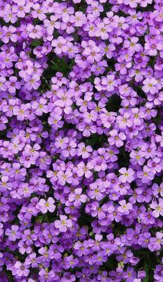 Best Flower Wallpaper, Purple Flowers Wallpaper, Spring Wallpaper, Blue Flowers, Summer Flowers, Flower Aesthetic, Purple Aesthetic, Aesthetic Art, Flower Vase Making