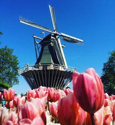 Em breve post do blog sobre Keukenhof! 💐🌷💐🌷 #keukenhof #holland #tulips #garden #flowers #flowerslovers #tulipslover #viagemjovem Tulips Garden, Holland, Building, Flowers, Travel, Destinations, The Nederlands, Viajes, Buildings