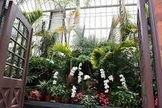 winter garden orchid show biltmore - Google Search